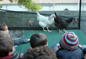 enfants-et-poules